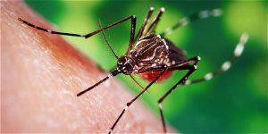 TeCuentoPeru-Zika