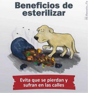 TE CUENTO PERU-VanCan-003