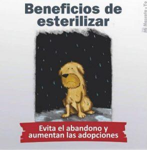 TE CUENTO PERU-VanCan-005