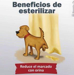 TE CUENTO PERU-VanCan-006