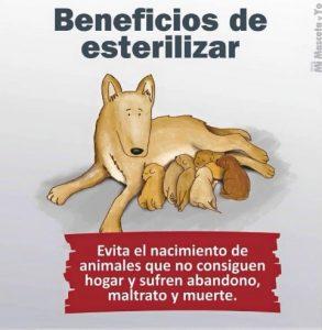 TE CUENTO PERU-VanCan-007