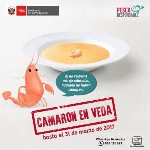 TE CUENTO PERU-camaron-veda-001