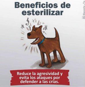 TE CUENTO PERU-VanCan-001