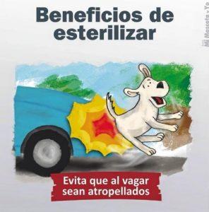TE CUENTO PERU-VanCan-004